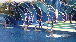 Dolphin Days (Full Show) at SeaWorld San Diego on 8/28/15