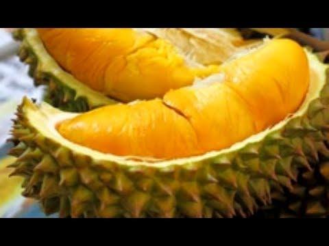 Mantap Makan Durian Musang King di Penang - Malaysia