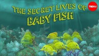 The Secret Lives Of Baby Fish - Amy McDermott