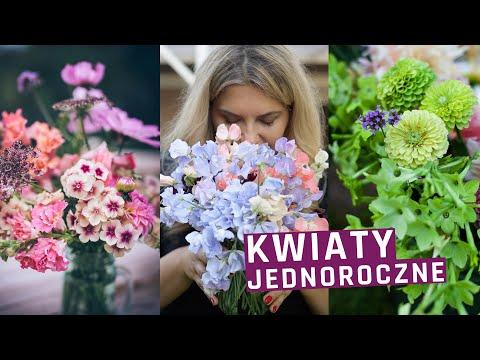Najlepsze kwiaty jednoroczne