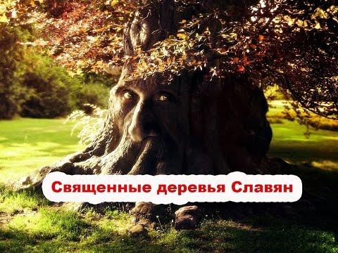 Священные деревья Славян: Древо Перуна - Дуб