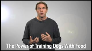 Food Vs. Toy & Why? From The Power Of Training Dogs With Food