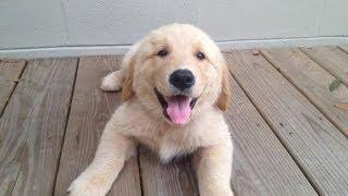 My Golden Retriever Puppy Daisy!