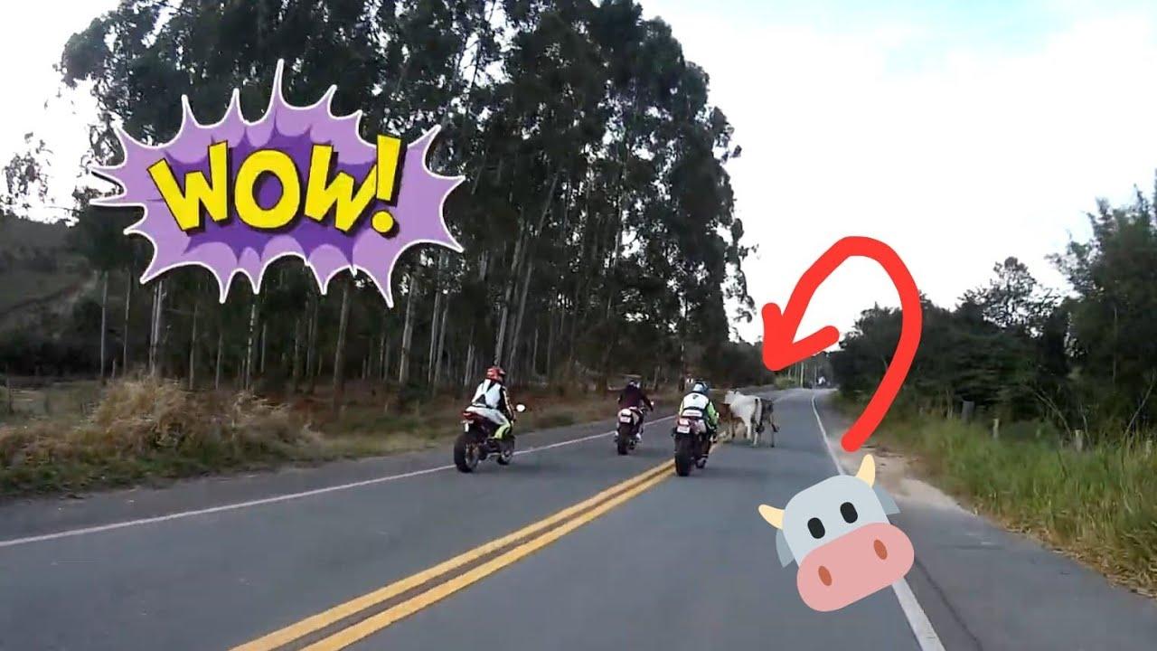 Susto na estrada! ANIMAIS NA PISTA no passeio de moto! Cuidado!