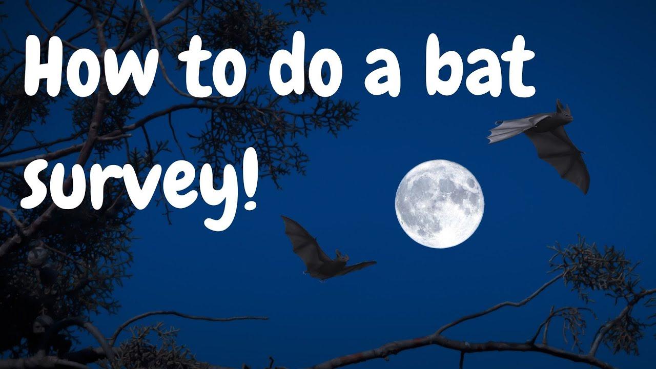 How to do a bat survey!