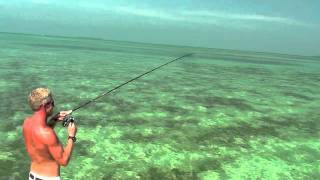 Sight fishing for barracuda on the flats of Key West, Fl.