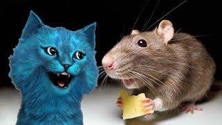 Мой друг КРЫСка спасается в городе от людей и собак СИМУЛЯТОР КРЫСЫ КОТЁНОК ЛАЙК Rat life simulator