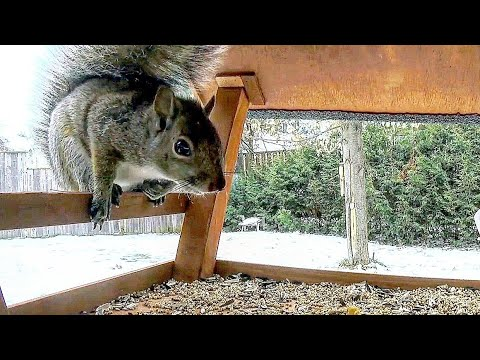 Battle For Birdhouse 2 | Squirrels v Birds - 12 Hour Winter Video For Cats To Watch | Relax Your Pet