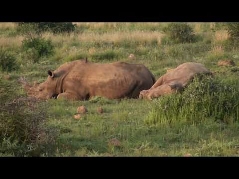 Morning Safari Drive - Pilanesberg National Park