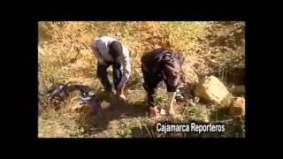 Ronderos colocan a delincuentes sobre nido de hormigas como castigo por robar Cajamarca
