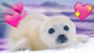 I love Seals ❤️