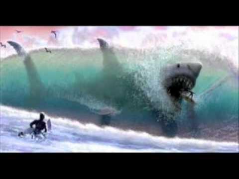 Megalodon the worlds largest shark  YouTube
