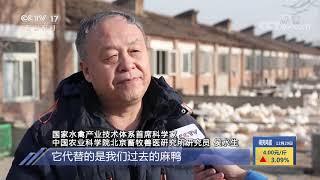 《中国三农报道》 20201229|CCTV农业 - YouTube