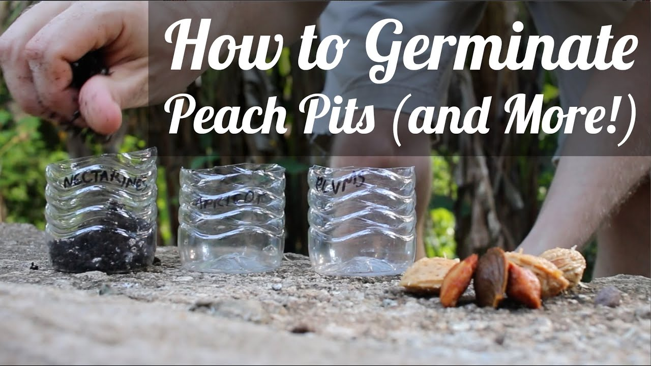 how to open a peach pit
