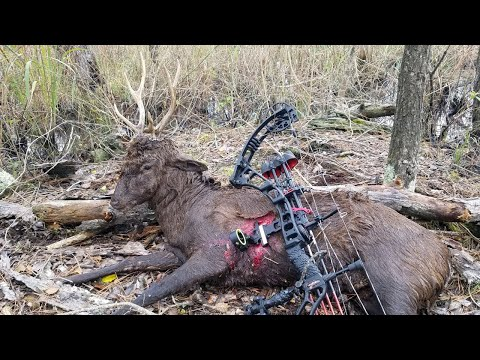 Public Land Sika Deer Hunting In Maryland