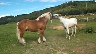 Big Horse Versus Small Horse Battle