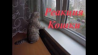 Реакция Кошки на Птиц за Окном 😻Забавная Кошка Scottish Fold 🐱 Funny Kitten Cat