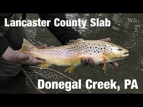 WB - Fly Fishing Lancaster County Slab, Donegal Creek, PA - May '17