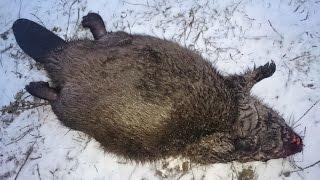 Охота на бобра поздней осенью с ружьем