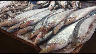 Vientiane market Fish in market - Laos food 2018