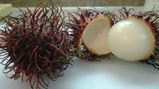 Freaky Food Friday: Rambutan!