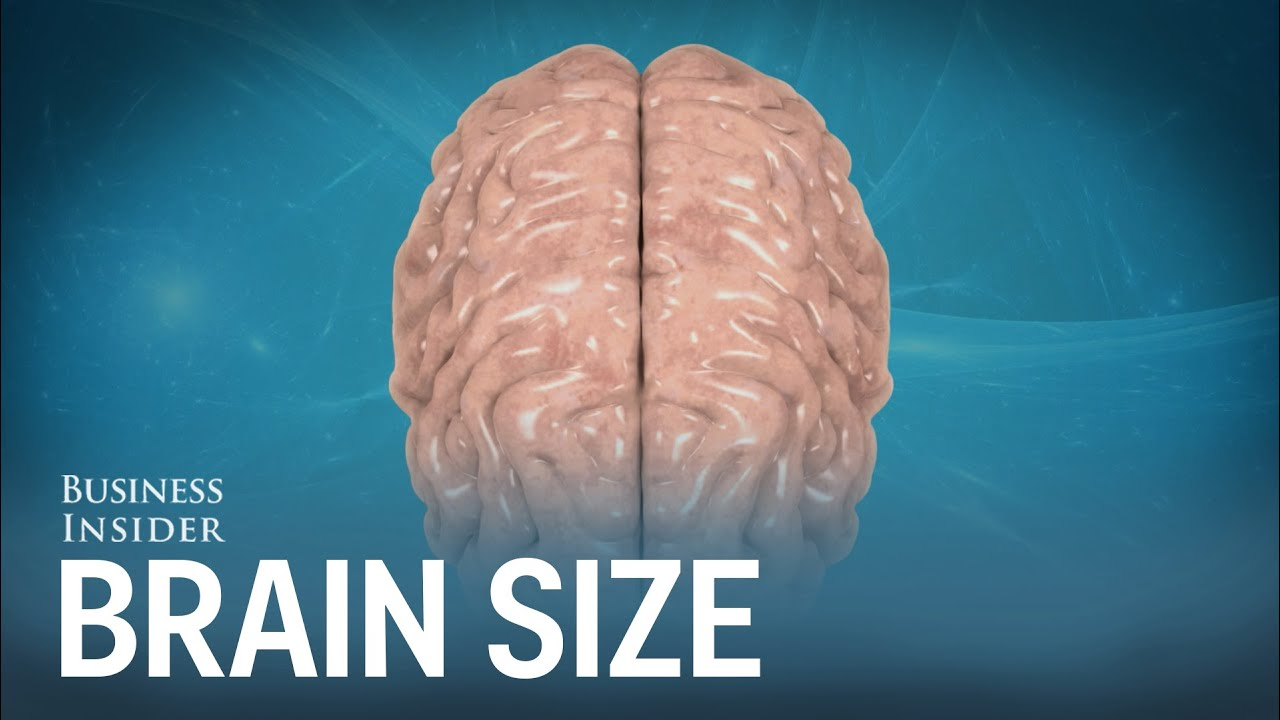 Human brains compared to other animals - YouTube