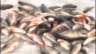 Wędkarstwo Okoń Karaś Szczupak spod lodu (Ice Fishing) Podlodowe Wędkarstwo  Tłumaczenie Beta!