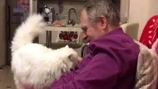 Кот очень любит своего хозяина!