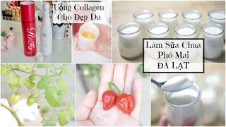 Cuối Tuần Làm Sữa Chua Phô Mai Đà Lạt ♥ Uống Collagen cho Đẹp Da | mattalehang