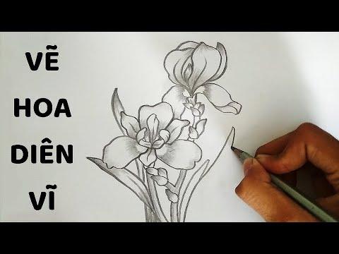Vẽ Hoa Diên Vĩ bằng bút chì – How to draw Iris Flower