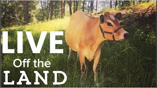 Download Living off the Land - Feed Your family from Your homestead Mp3 and Videos
