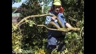 Arbor Tech Tree Service Billings MT 59101-6656