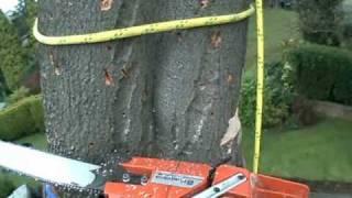 Beech Tree - Negative Rigging