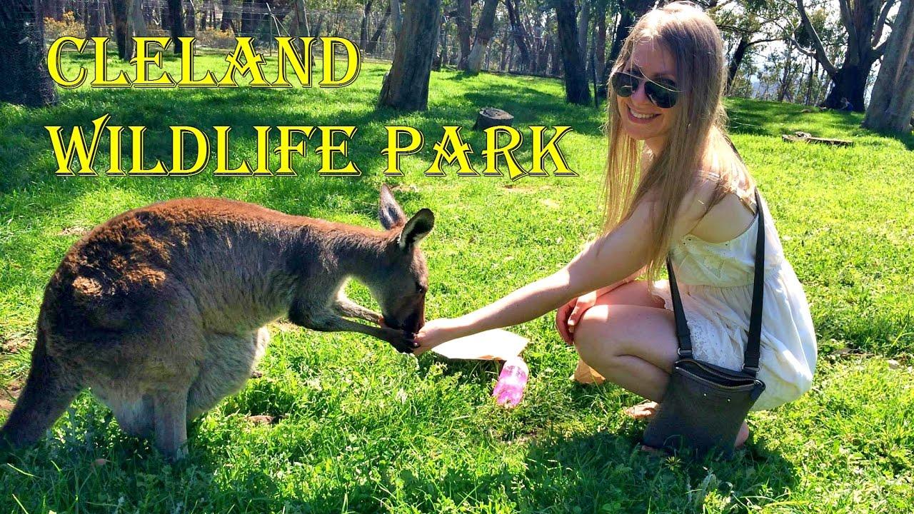 Cleland Wildlife Park South Australia Youtube