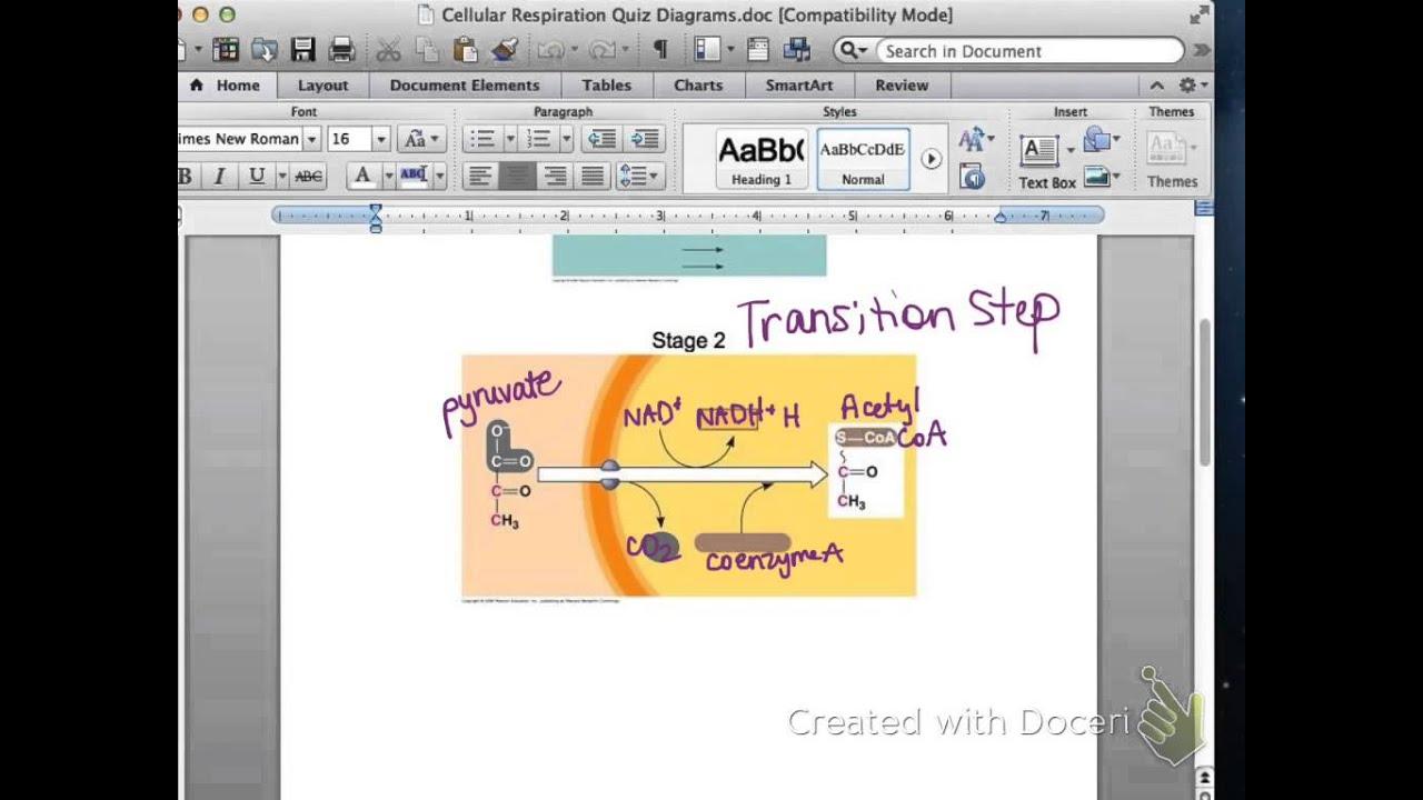 ap biology cellular respiration