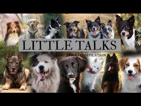 LITTLE TALKS | Dog tricks compilation | Full MEP