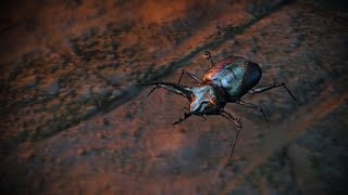 Path of Exile: Beetle Pet