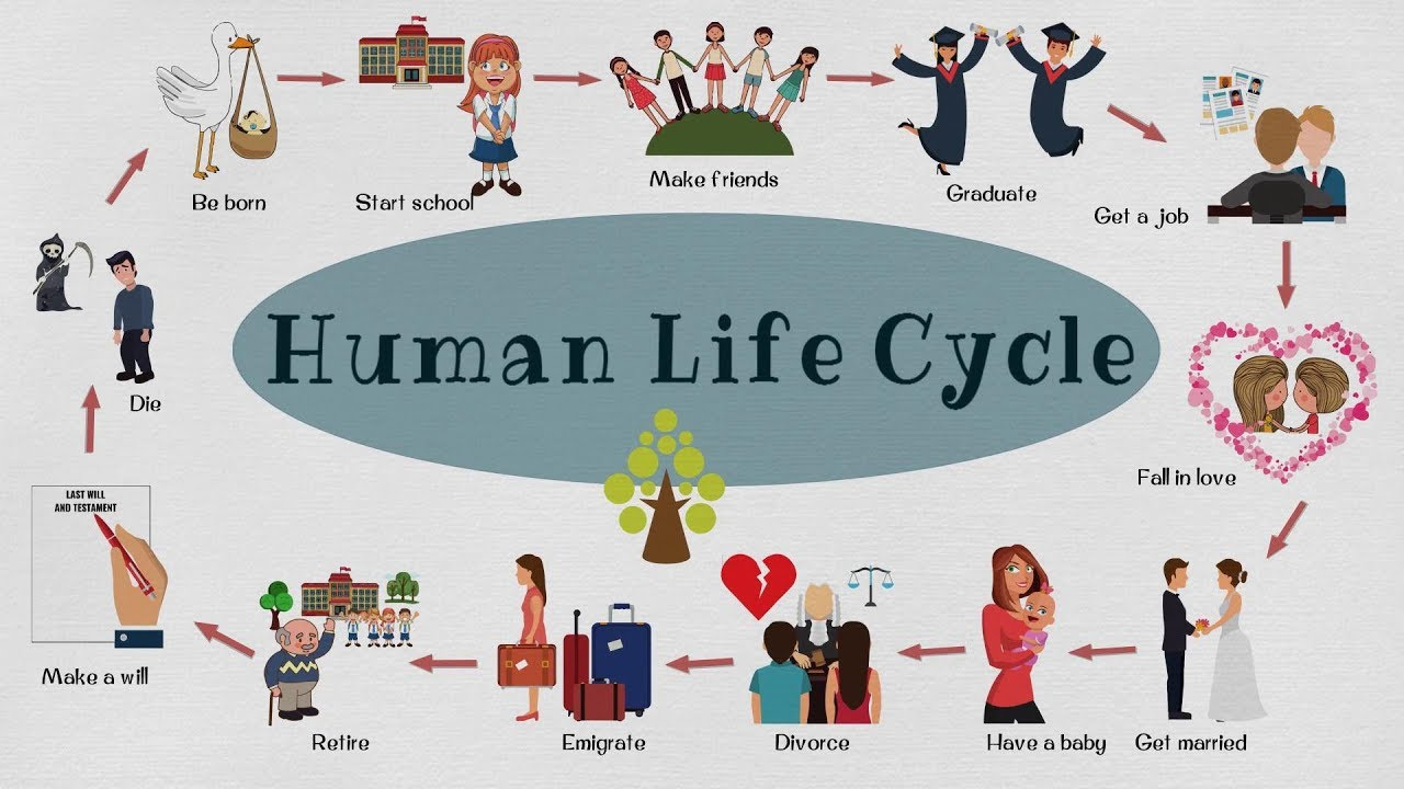 Stage of life definition