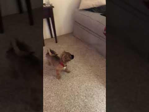 Dog VS cat