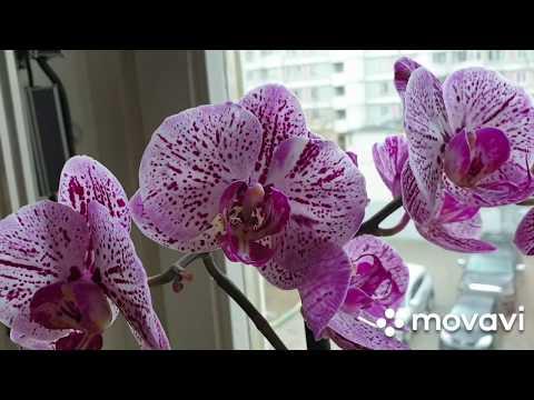 Обзор моих орхидей в последний день уходящей зимы 🥶💝👣