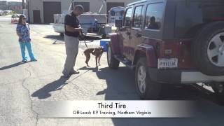 Pit Bull On Drug Detection On 6th Lesson!  Doing Great! Nose Work Training, Northern Virginia