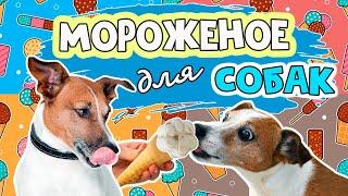Мороженое для собак: готовим сами