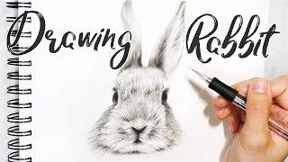 Rabbit Sketch「 Realistic Rabbit Drawing 」Draw a Rabbit - 兔子素描 手繪畫兔 Dessiner un Lapin 鉛筆畫