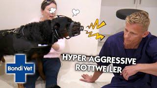 Vet Shows Compassion to Hyper Aggressive Rottweiler | Bondi Vet | Vet On The Hill