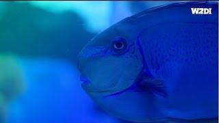 What2doin · Palma Aquarium [HD] · Mallorca Activities