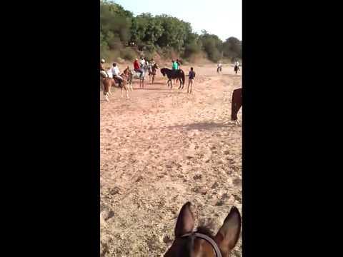 ss club, Saddle And Stable Club, Horse stabling, riding school, ahmedabad, gujarat, india, safari