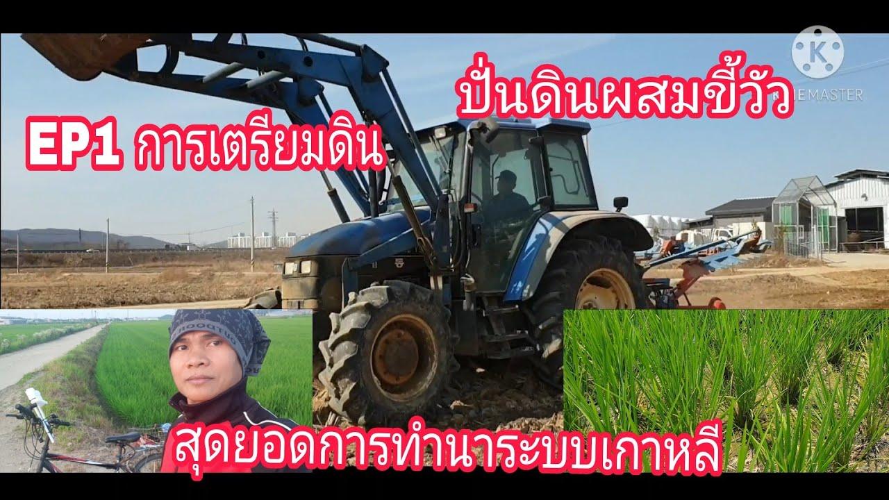 เริ่มแล้วสุดยอดการทำนาระบบเกาหลีEP1#การเตรียมดินปั่นดินผสมขี้วัวหมักตอซังข้าว26/2/2021