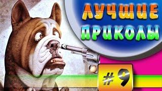 Лучшие приколы Смешные собаки Подборка видео