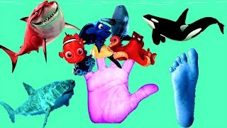 Sea Animals Finger Family | Baby Shark, Dory And More