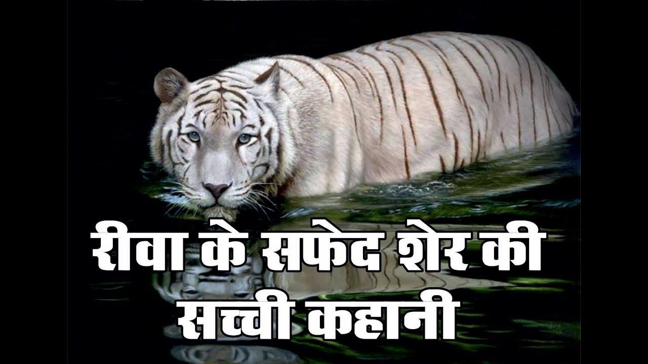 mukund pur white tiger safari ki story